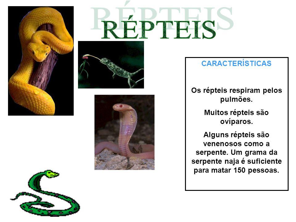 Os répteis respiram pelos pulmões. Muitos répteis são ovíparos.