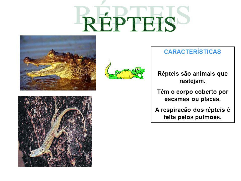 RÉPTEIS CARACTERÍSTICAS Répteis são animais que rastejam.