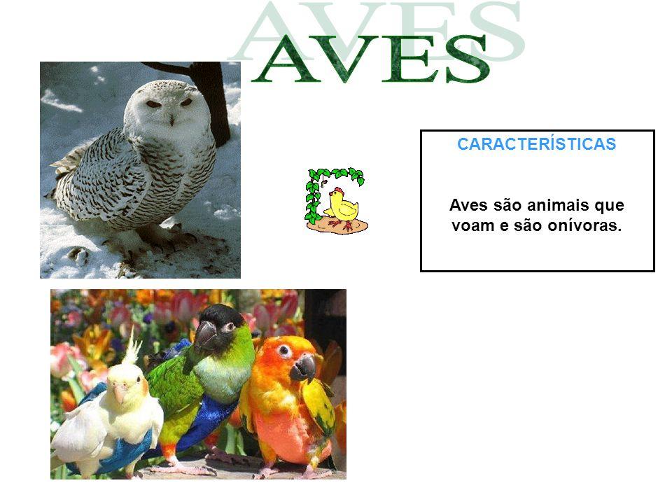 Aves são animais que voam e são onívoras.
