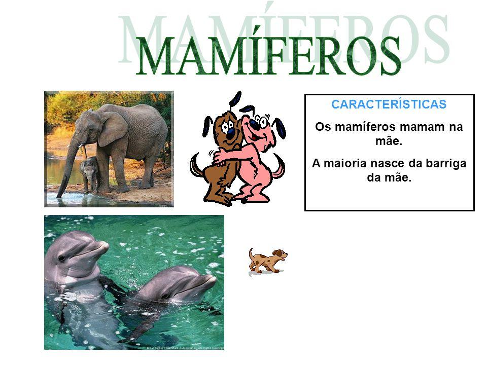 Os mamíferos mamam na mãe. A maioria nasce da barriga da mãe.