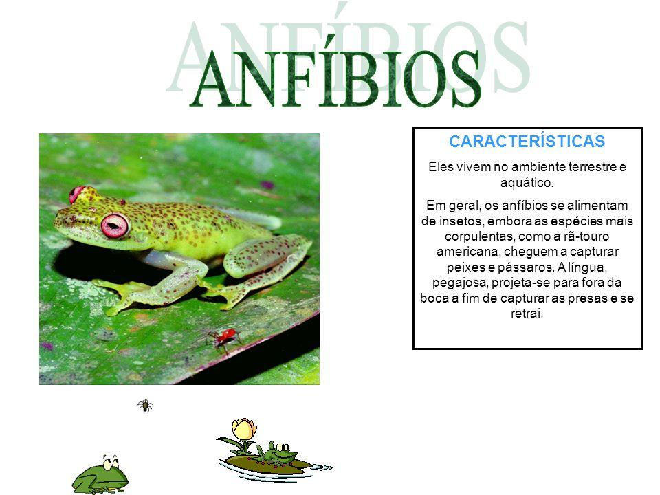 Eles vivem no ambiente terrestre e aquático.