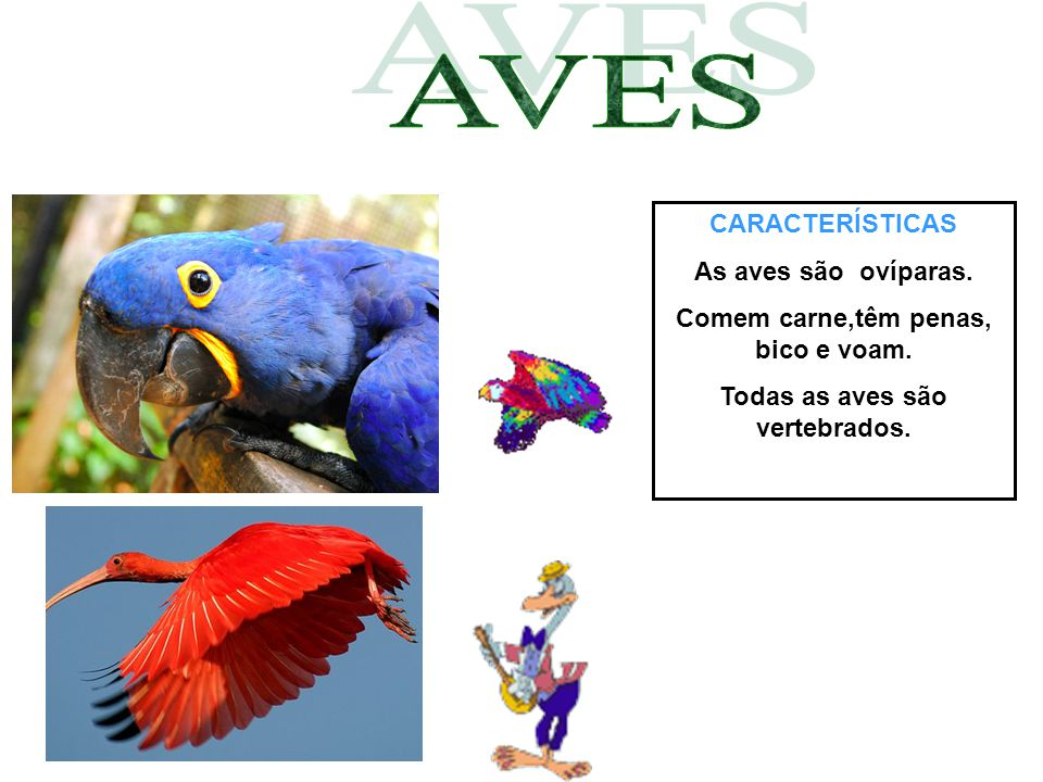 Comem carne,têm penas, bico e voam. Todas as aves são vertebrados.