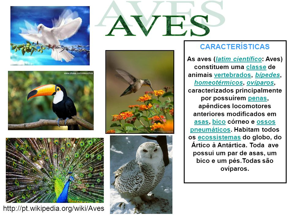 AVES CARACTERÍSTICAS http://pt.wikipedia.org/wiki/Aves