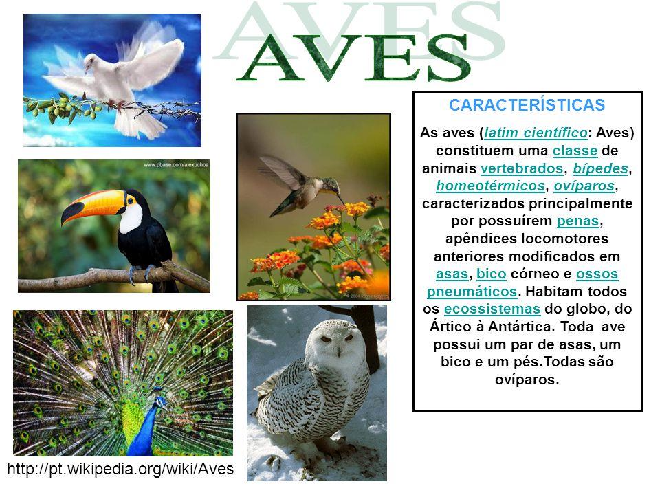 AVES CARACTERÍSTICAS http://pt.wikipedia.org/wiki/Aves