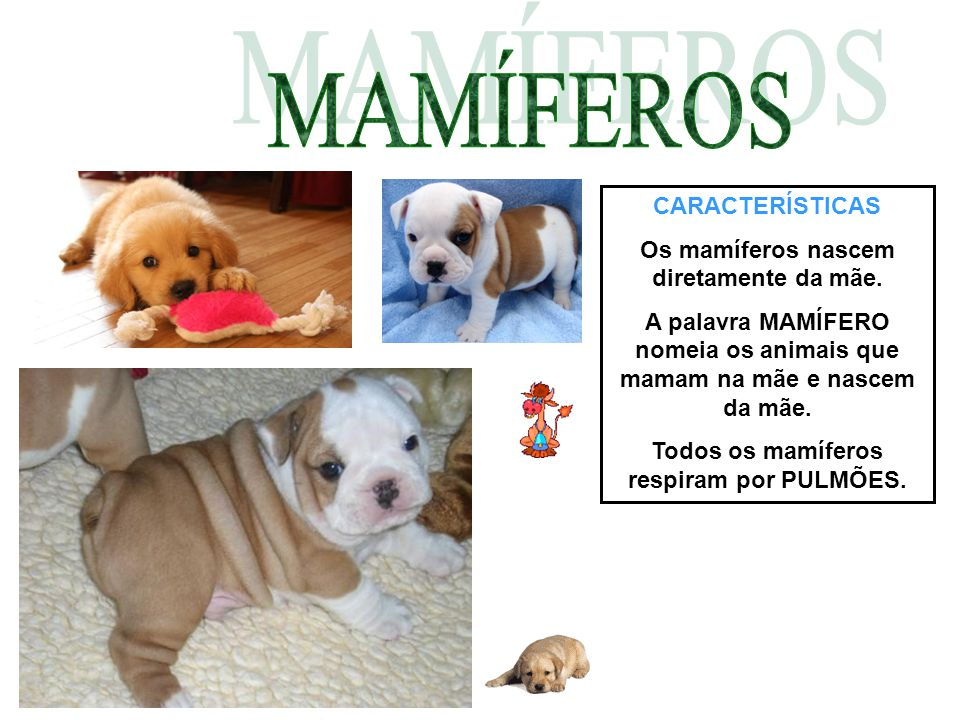 MAMÍFEROS CARACTERÍSTICAS Os mamíferos nascem diretamente da mãe.