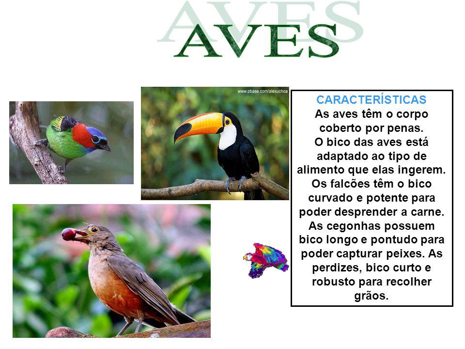 As aves têm o corpo coberto por penas.