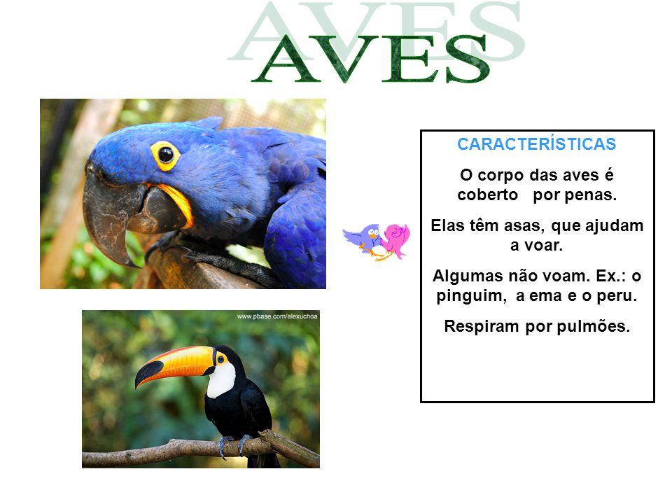 AVES CARACTERÍSTICAS O corpo das aves é coberto por penas.