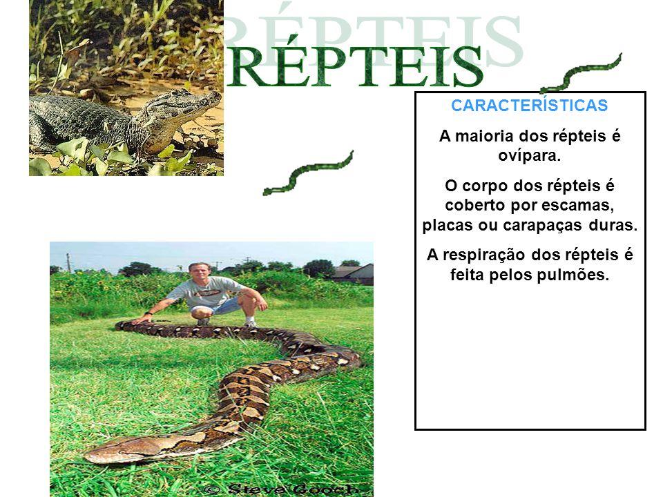 RÉPTEIS CARACTERÍSTICAS A maioria dos répteis é ovípara.