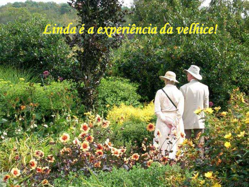 Linda é a experiência da velhice!