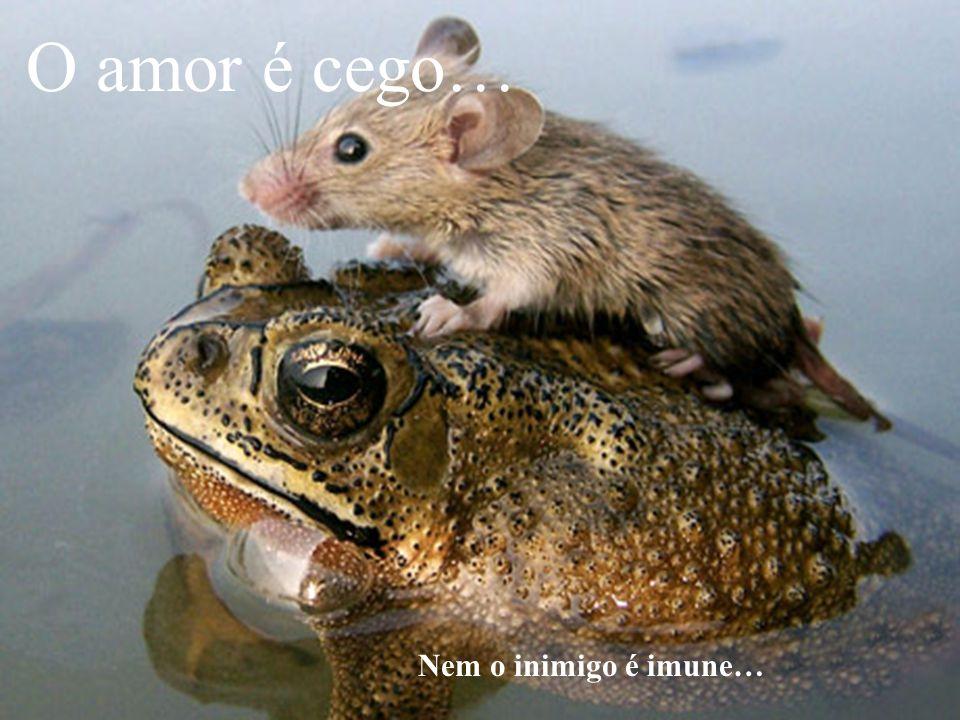 O amor é cego… Nem o inimigo é imune…