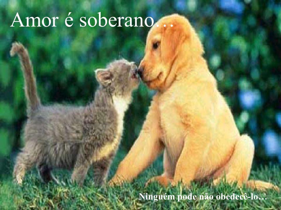 Amor é soberano… Ninguém pode não obedecê-lo…