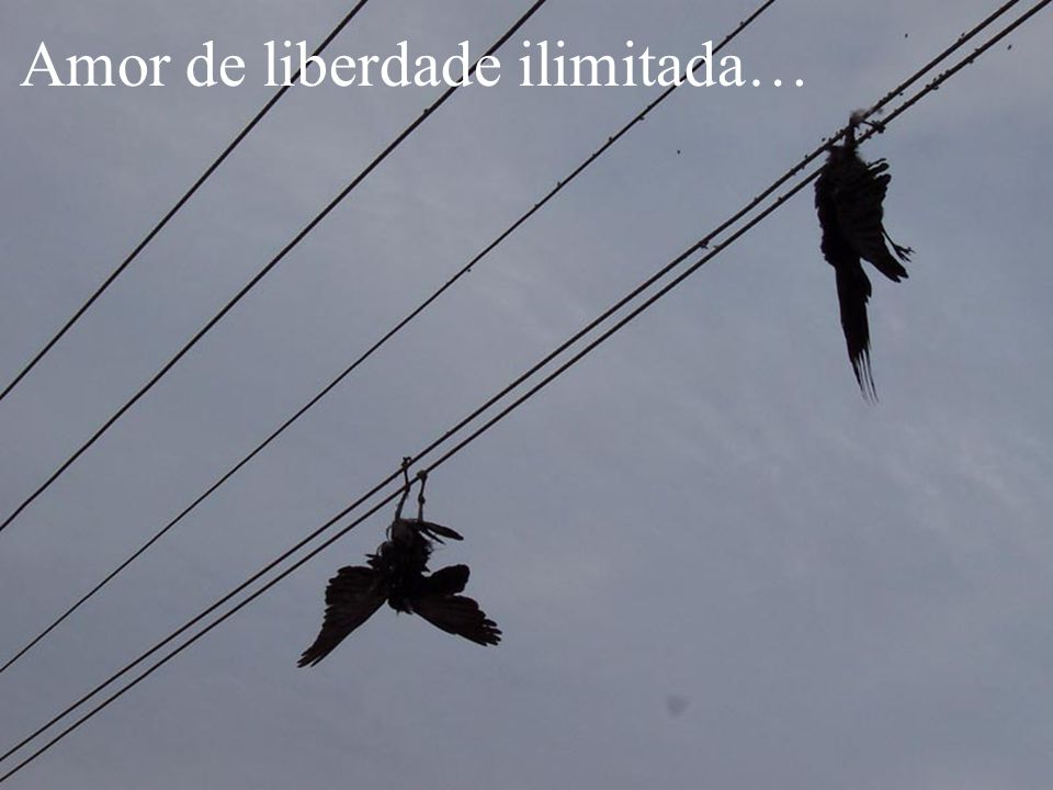 Amor de liberdade ilimitada…