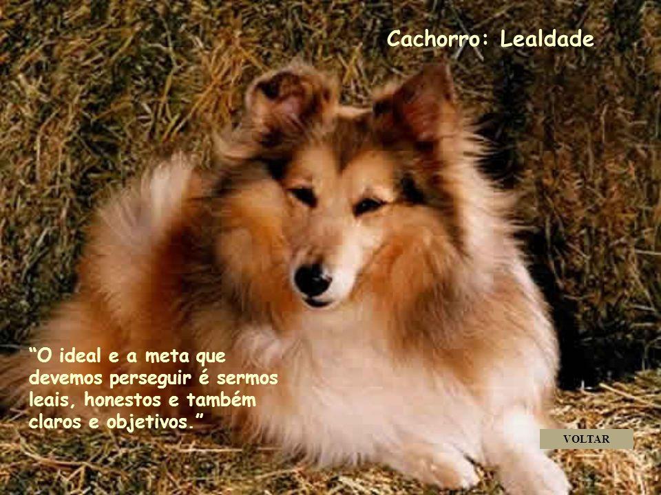 Cachorro: Lealdade . . . . O ideal e a meta que devemos perseguir é sermos leais, honestos e também claros e objetivos.