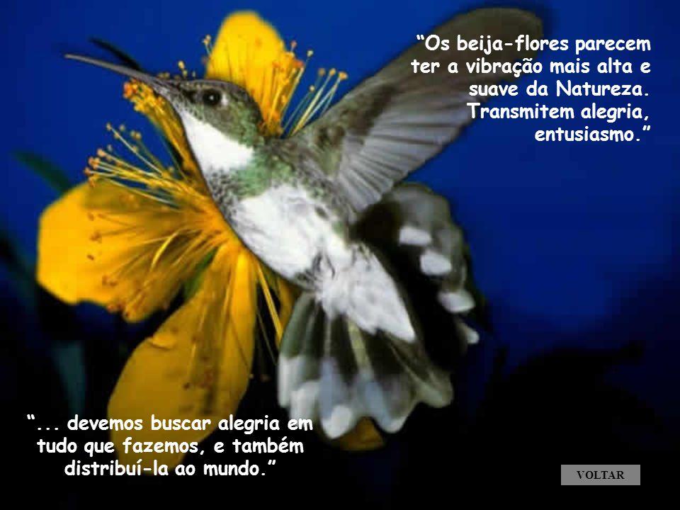 Os beija-flores parecem ter a vibração mais alta e suave da Natureza