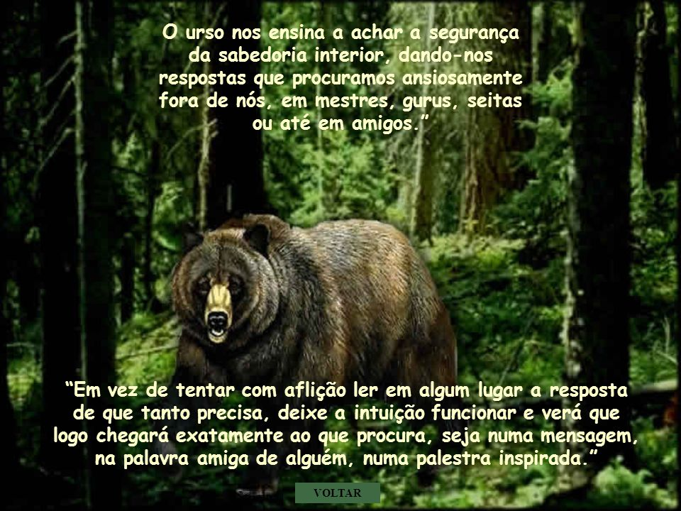 O urso nos ensina a achar a segurança da sabedoria interior, dando-nos respostas que procuramos ansiosamente fora de nós, em mestres, gurus, seitas ou até em amigos.