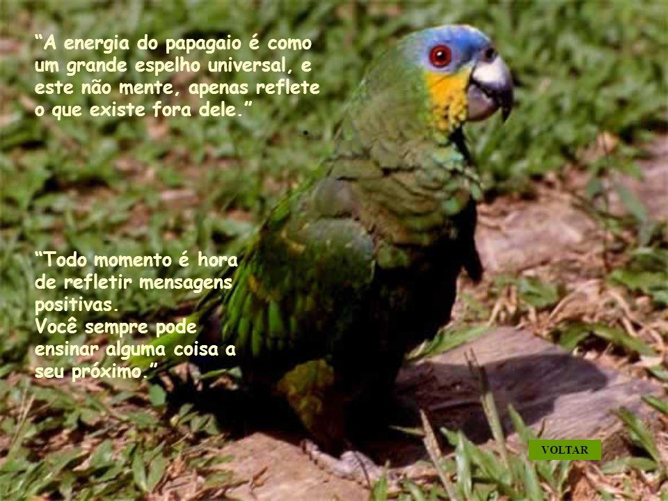A energia do papagaio é como um grande espelho universal, e este não mente, apenas reflete o que existe fora dele.