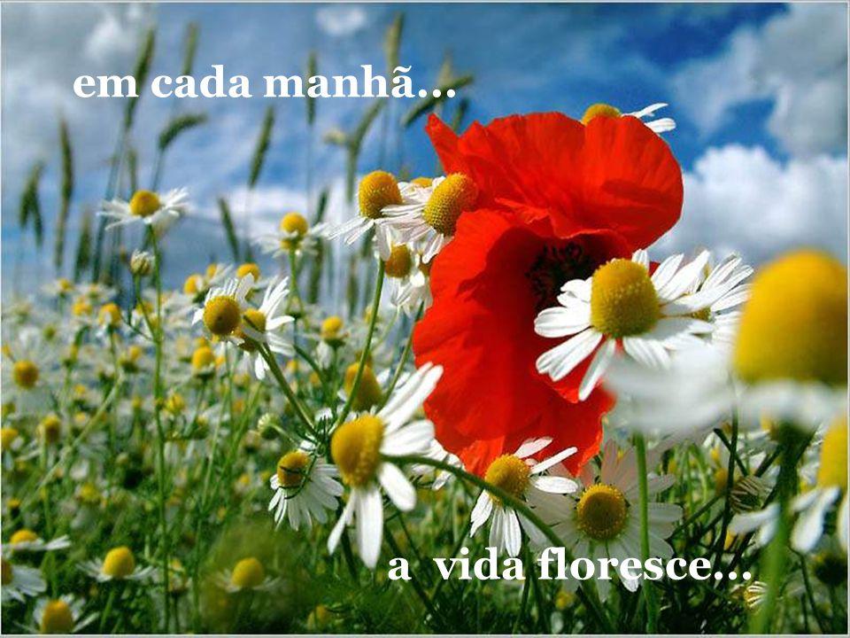 em cada manhã... a vida floresce...