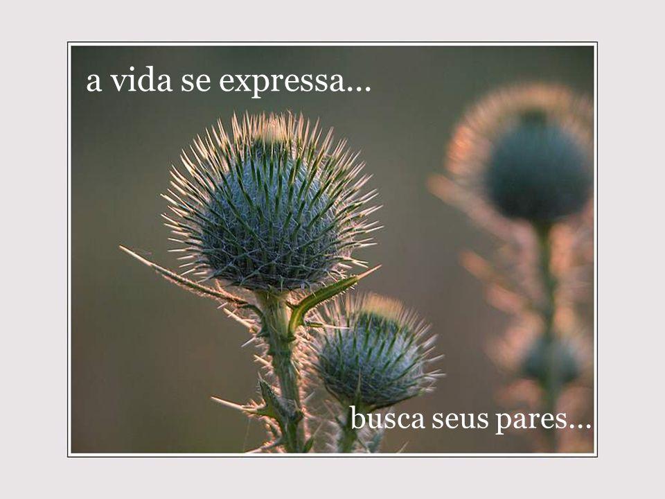 a vida se expressa... busca seus pares...