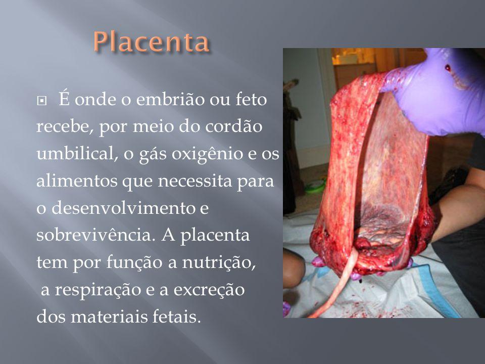 Placenta É onde o embrião ou feto recebe, por meio do cordão