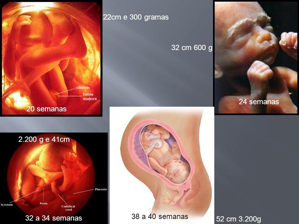 22cm e 300 gramas 32 cm 600 g. 24 semanas. 20 semanas. 2.200 g e 41cm. 32 a 34 semanas. 38 a 40 semanas.