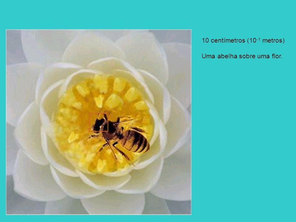 10 centímetros (10-1 metros)