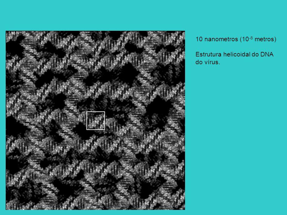 10 nanometros (10-8 metros) Estrutura helicoidal do DNA do vírus.
