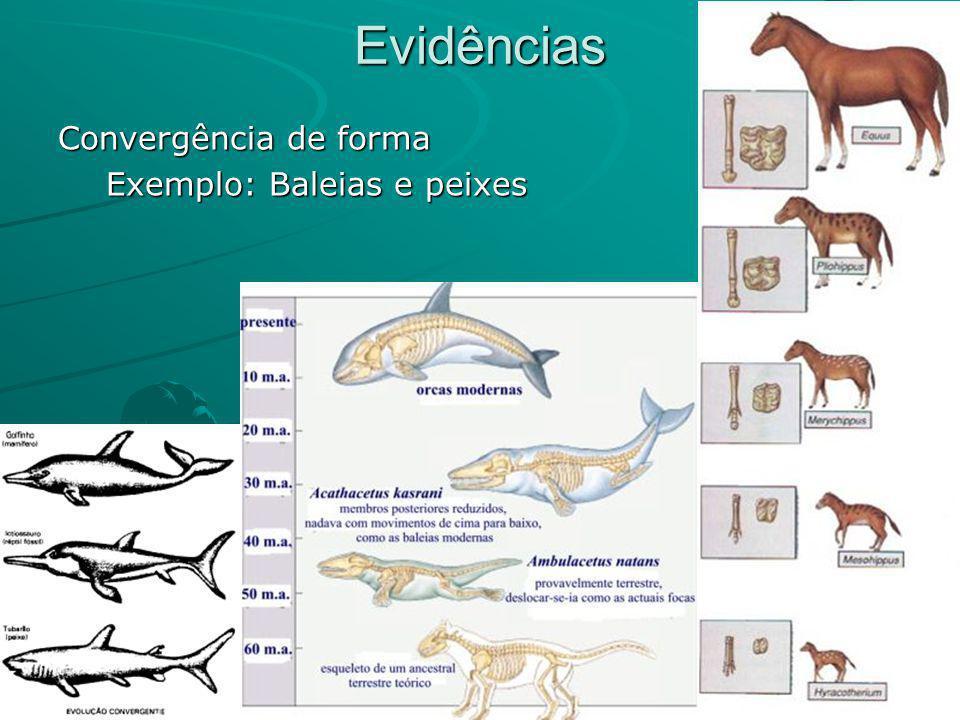 Evidências Convergência de forma Exemplo: Baleias e peixes