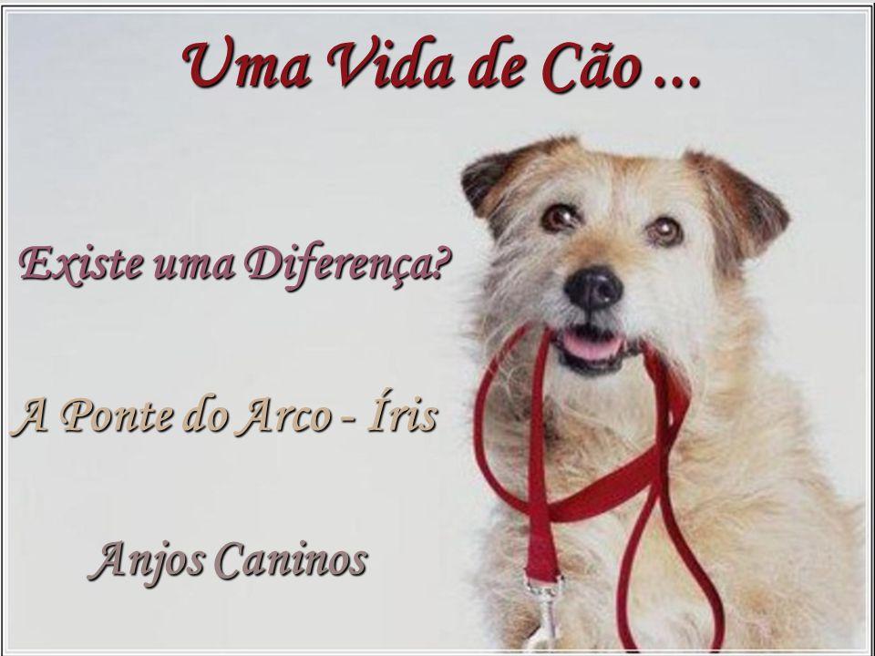 Uma Vida de Cão ... Existe uma Diferença A Ponte do Arco - Íris