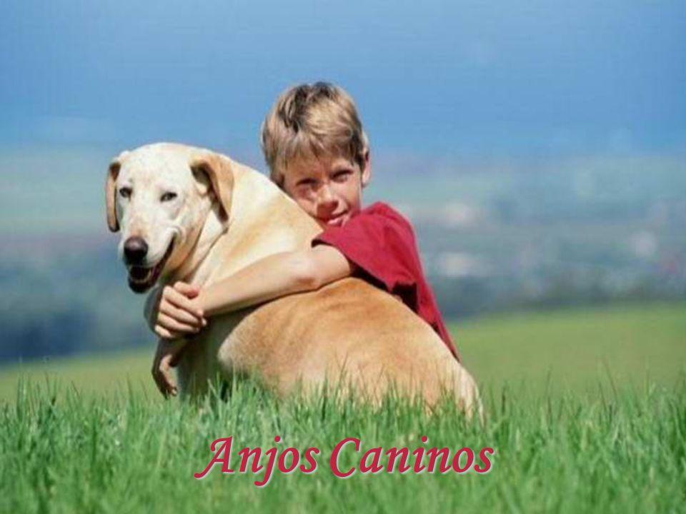 Anjos Caninos