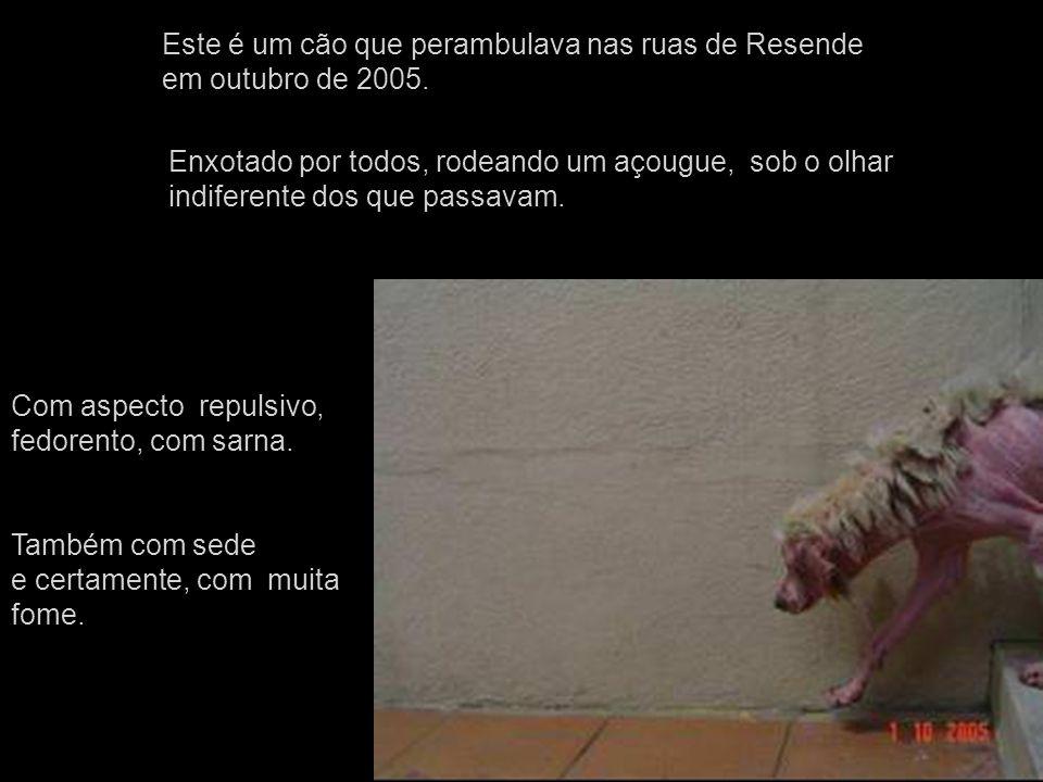 Este é um cão que perambulava nas ruas de Resende