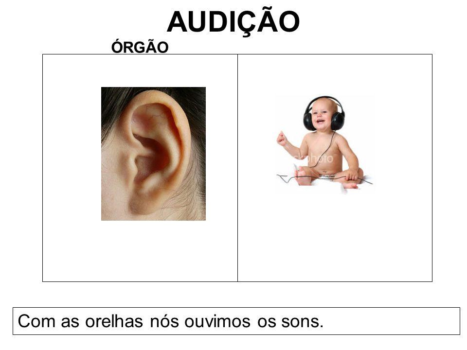 AUDIÇÃO ÓRGÃO Com as orelhas nós ouvimos os sons.