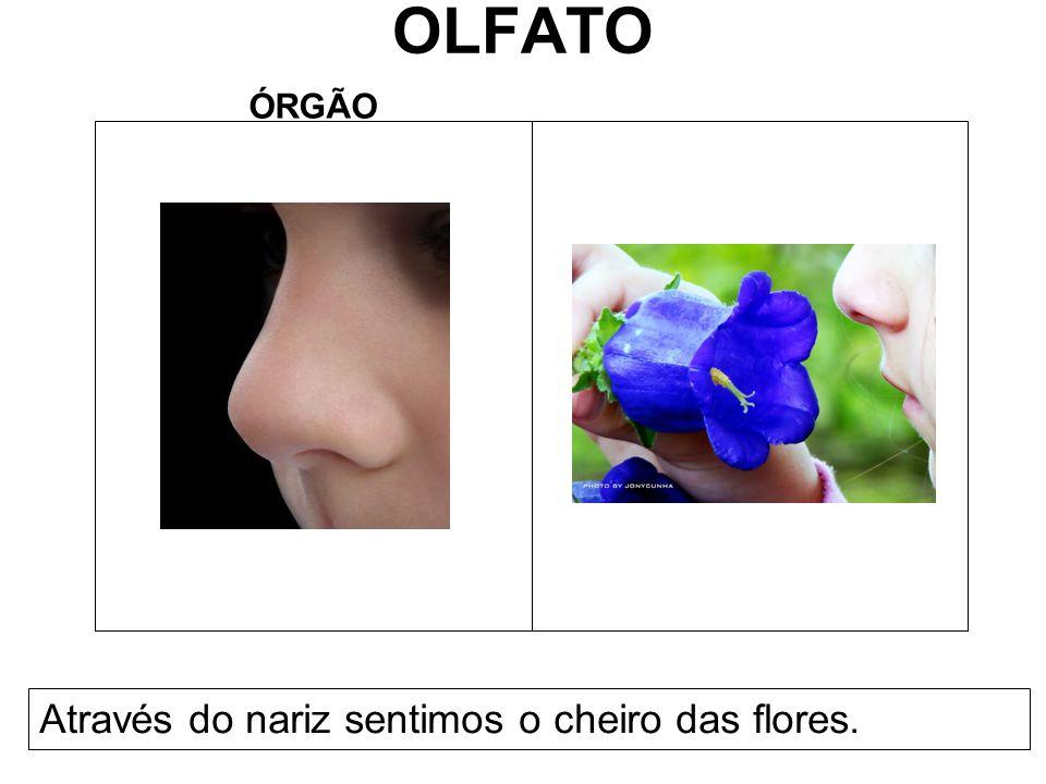 OLFATO ÓRGÃO Através do nariz sentimos o cheiro das flores.