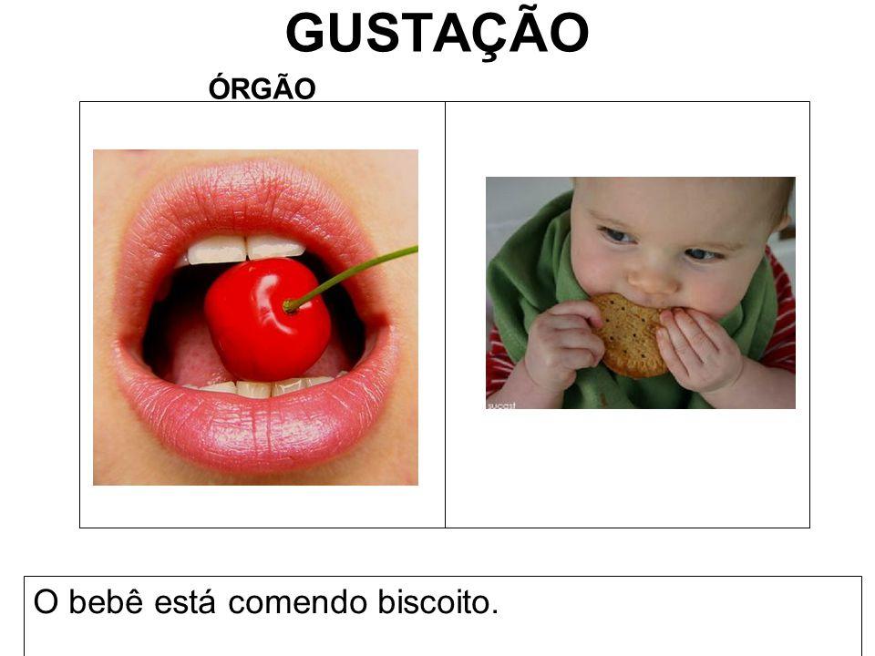 GUSTAÇÃO ÓRGÃO O bebê está comendo biscoito.