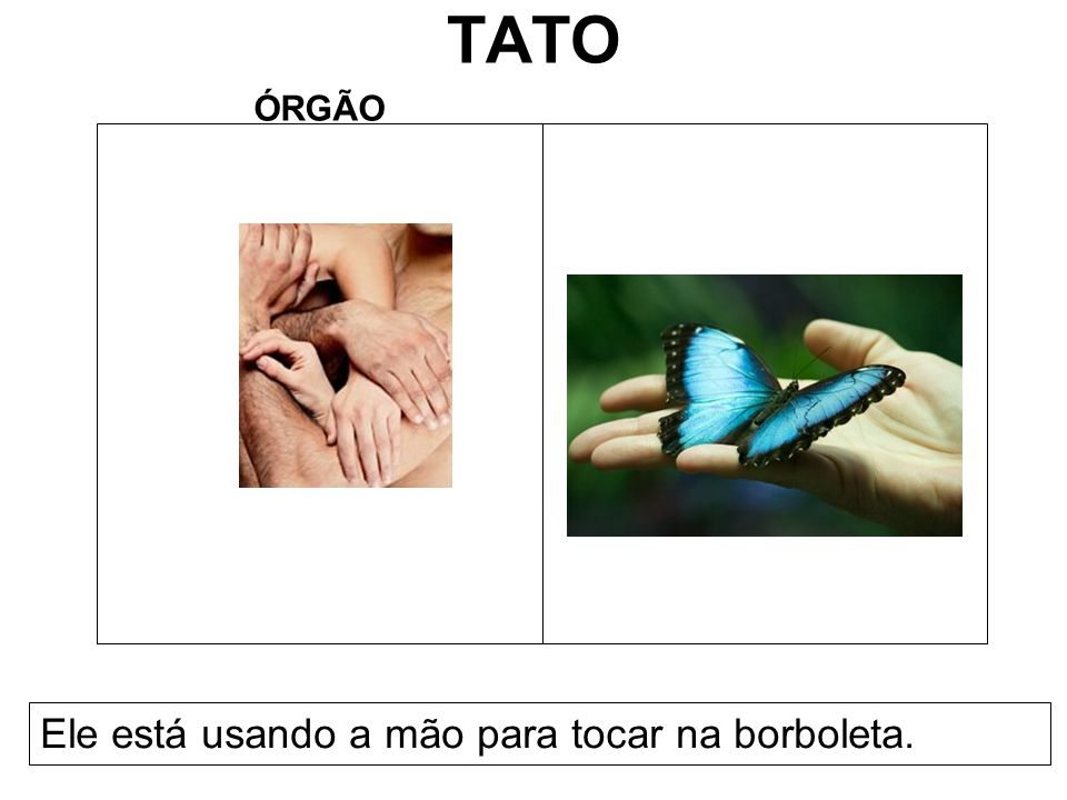 TATO ÓRGÃO Ele está usando a mão para tocar na borboleta.