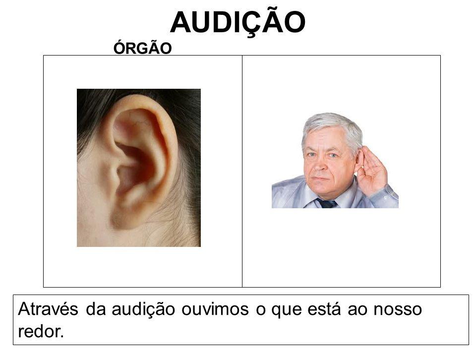 AUDIÇÃO ÓRGÃO Através da audição ouvimos o que está ao nosso redor.