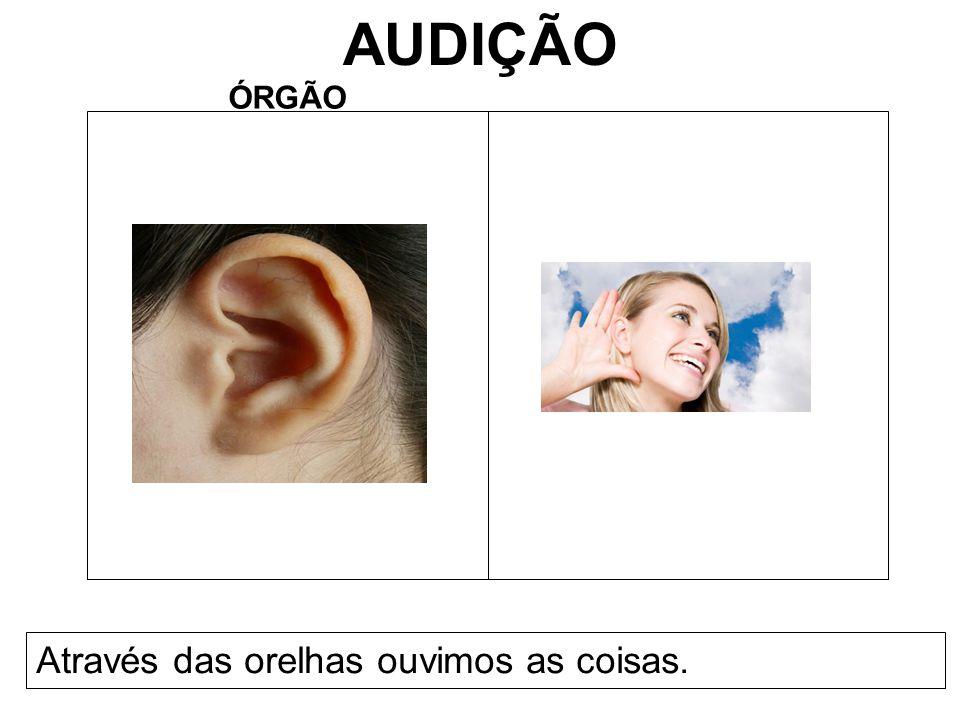 AUDIÇÃO ÓRGÃO Através das orelhas ouvimos as coisas.