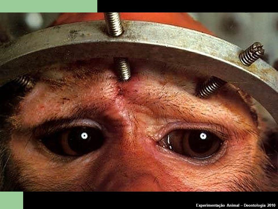 Experimentação Animal – Deontologia 2010