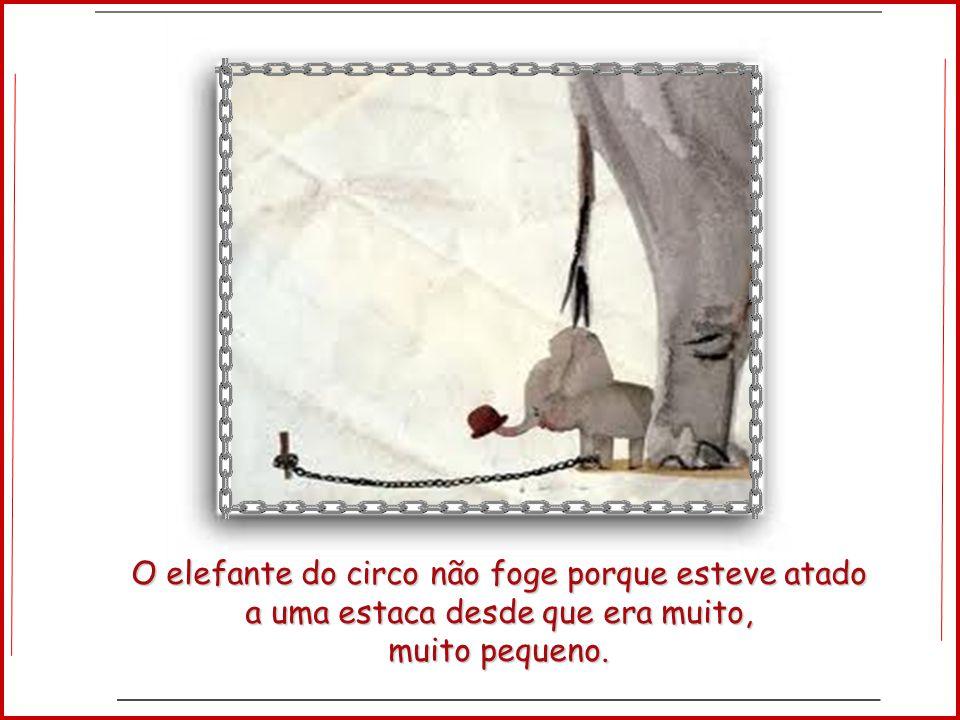 O elefante do circo não foge porque esteve atado a uma estaca desde que era muito,