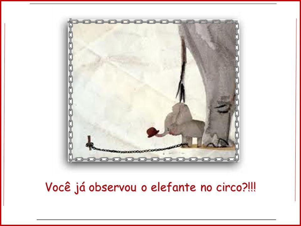 Você já observou o elefante no circo !!!