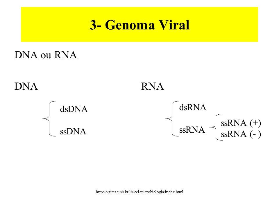 3- Genoma Viral DNA ou RNA DNA RNA dsRNA dsDNA ssRNA ssDNA ssRNA (+)