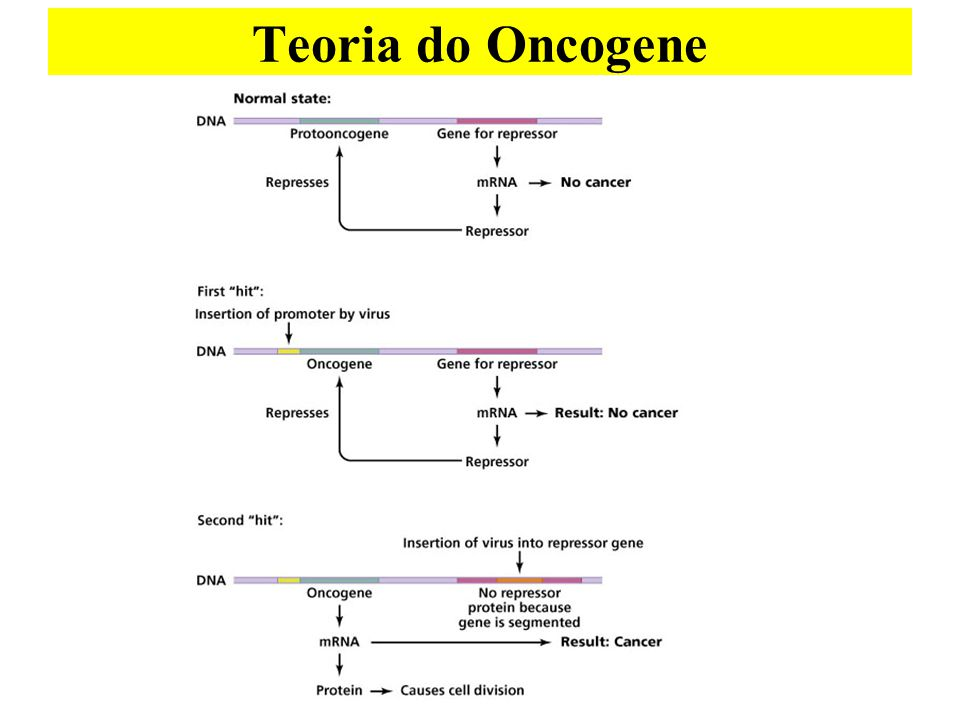 Teoria do Oncogene