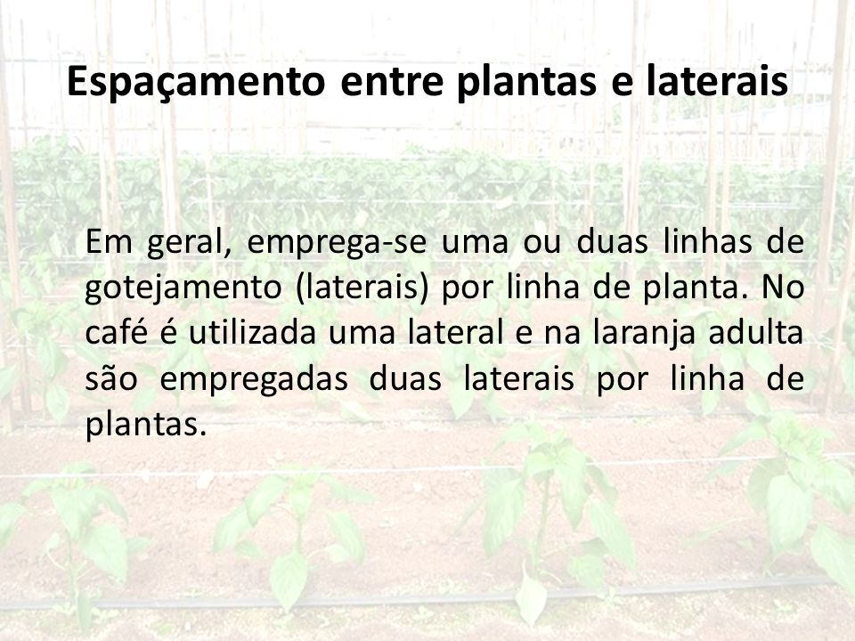 Espaçamento entre plantas e laterais