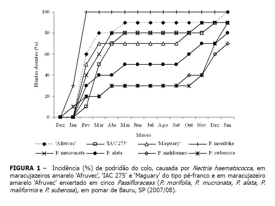 FIGURA 1 – Incidência (%) de podridão do colo, causada por Nectria haematococca, em maracujazeiros amarelo 'Afruvec', 'IAC 275' e 'Maguary' do tipo pé-franco e em maracujazeiro amarelo 'Afruvec' enxertado em cinco Passifloraceas (P.