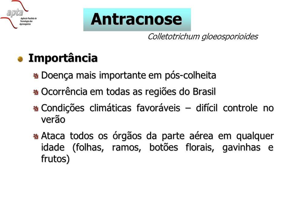 Antracnose Importância Doença mais importante em pós-colheita