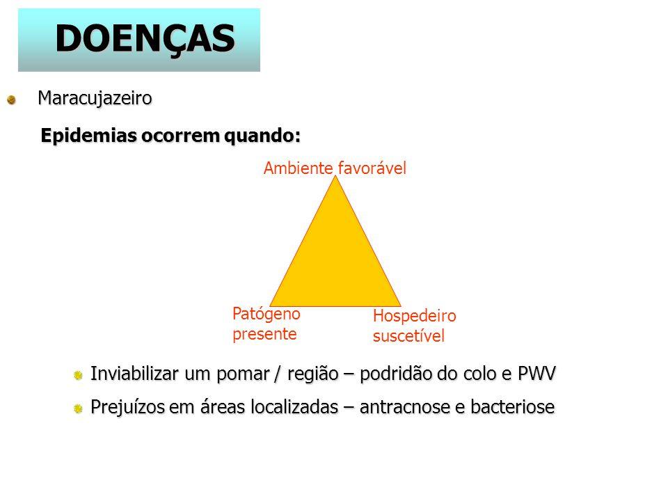 DOENÇAS Maracujazeiro Epidemias ocorrem quando: