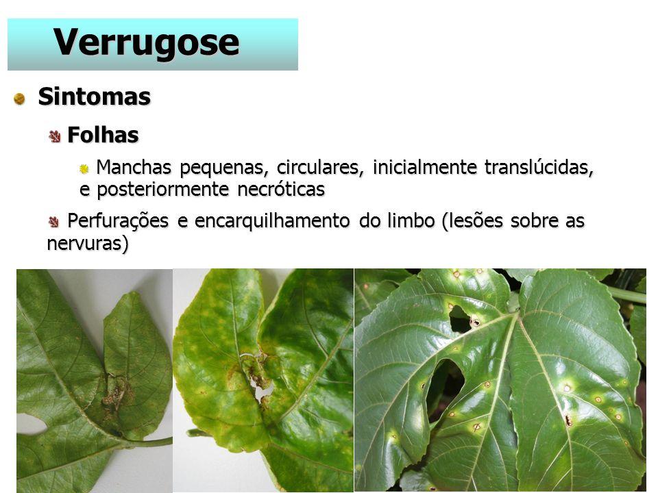 Verrugose Sintomas Folhas