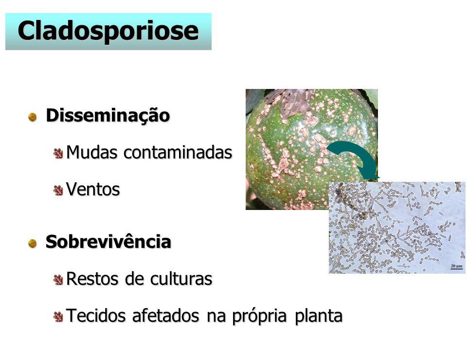 Cladosporiose Disseminação Mudas contaminadas Ventos Sobrevivência
