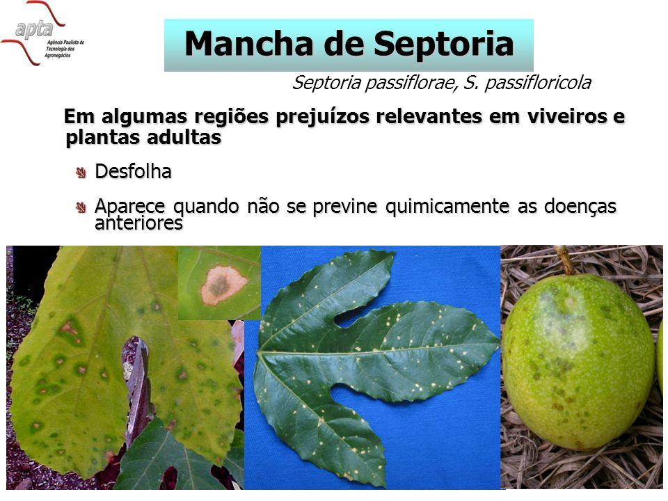 Mancha de Septoria Septoria passiflorae, S. passifloricola. Em algumas regiões prejuízos relevantes em viveiros e plantas adultas.