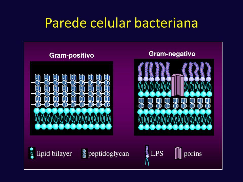 Parede celular bacteriana