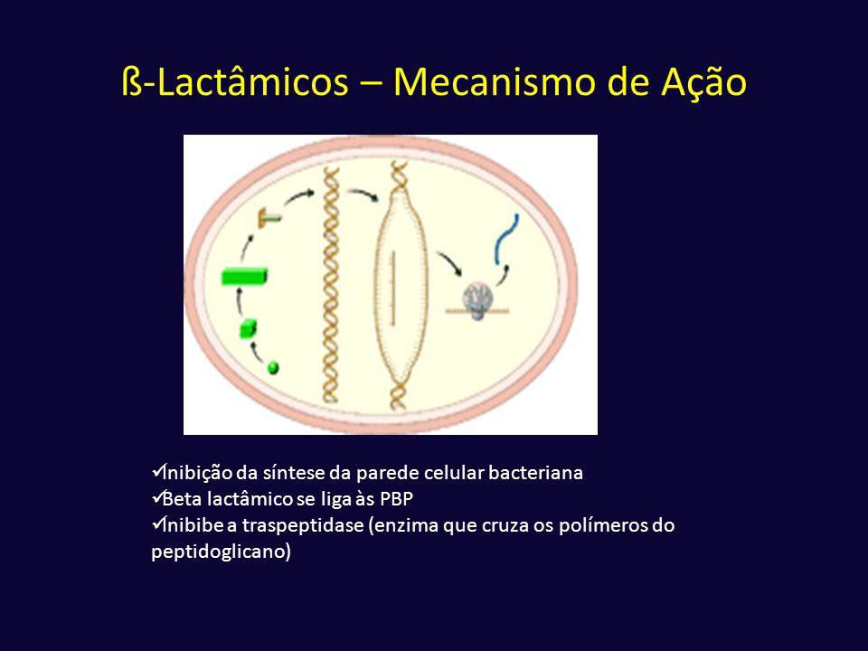 ß-Lactâmicos – Mecanismo de Ação